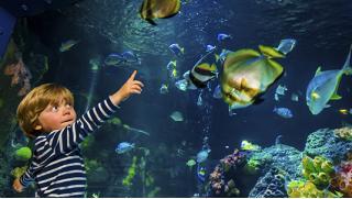 Купон на развлечения! Экскурсия в «Морской аквариум на Чистых прудах» для детей и взрослых! Скидка до 51%!