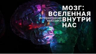 Купон на выставку! Билеты для детей и взрослых на интерактивную выставку «Мозг: вселенная внутри нас» от компании Brainworkgroup!